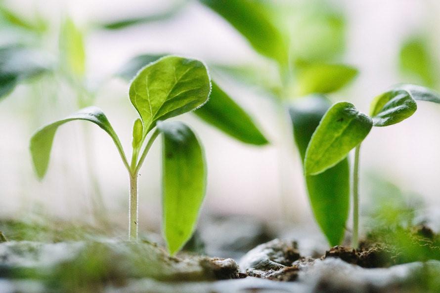 uso-de-mejoradores-de-suelos-mitos-y-hechos