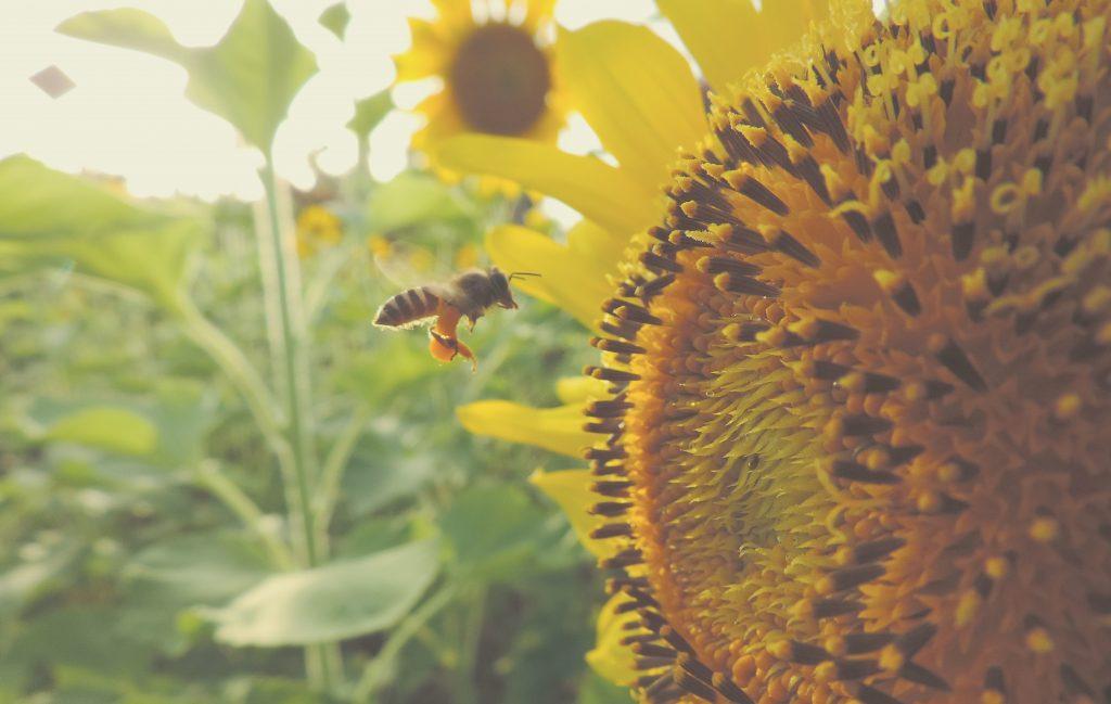 MacroBacter.com | ¿Menos cultivos y humanos en extinción si las ...